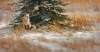 Winter Warmth                             by Edward Aldrich